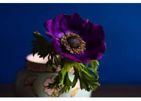 地球,海葵,花,花,杯子,叶子,紫色,花,壁纸,图片