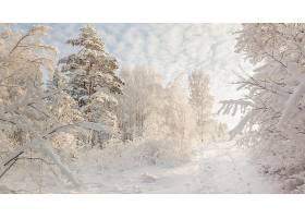地球,冬天的,雪,树,白色,森林,壁纸,图片