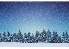 地球,冬天的,雪,树,自然,降雪,壁纸,图片
