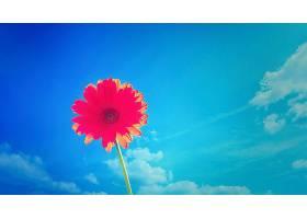 地球,大丁草,花,花,雏菊,阻止,阳光,粉红色,花,壁纸,