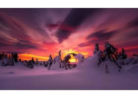 地球,冬天的,自然,日落,雪,树,天空,壁纸,图片