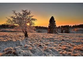 地球,冬天的,自然,树,冰冻的,壁纸,图片