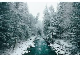 地球,河,冬天的,自然,森林,树,雪,壁纸,图片