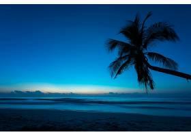 地球,海洋,自然,地平线,天空,手掌,树,壁纸,图片