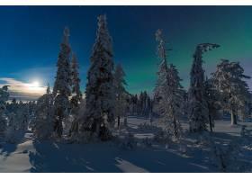 地球,冬天的,自然,树,天空,雪,曙光,北极星,壁纸,图片