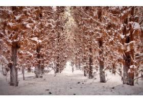 地球,冬天的,自然,树,森林,雪,壁纸,(1)图片