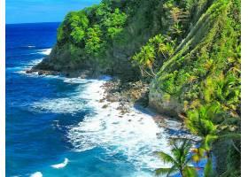 地球,海岸线,海岸,海洋,热带的,加勒比海,手掌,树,壁纸,