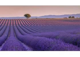 地球,淡紫色,花,夏天,领域,树,花,紫色,花,风景,壁纸,
