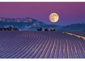 地球,淡紫色,花,月球,领域,壁纸,图片