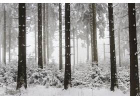 地球,冬天的,自然,树,雪,森林,壁纸,图片