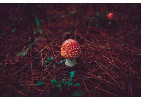 蘑菇,自然,秋天,壁纸,(4)图片