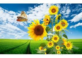 向日葵,花,自然,蝴蝶,领域,草,弹簧,花,壁纸,图片