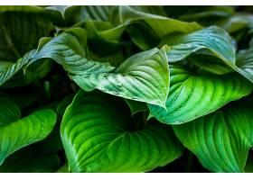 植物,叶子,绿色的,壁纸,图片