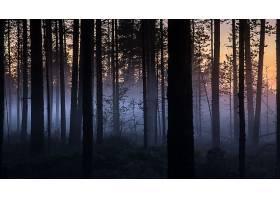 雾,自然,晚上,树,森林,壁纸,图片