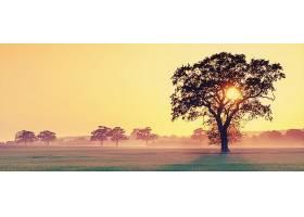 日落,阳光,风景,自然,领域,太阳,树,壁纸,图片