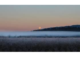 雾,自然,月球,领域,壁纸,图片