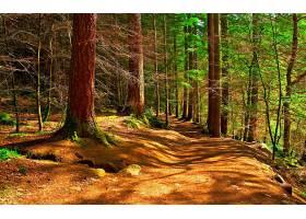 地球,风景,秋天,森林,树,壁纸,图片