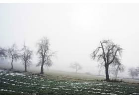 雾,自然,树,冬天的,壁纸,图片