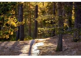 小路,自然,快活的,森林,壁纸,图片