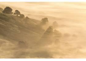 雾,自然,树,壁纸,(1)图片
