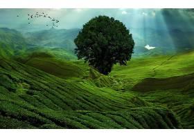 地球,风景,绿色的,山,树,壁纸,