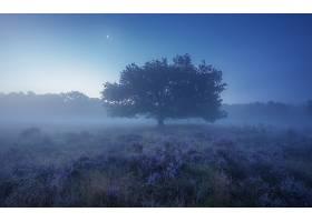 雾,自然,树,壁纸,(11)图片
