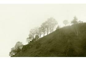 雾,自然,树,壁纸,(2)图片