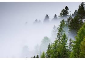 雾,自然,树,壁纸,(5)图片