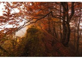 小路,自然,树,秋天,壁纸,图片