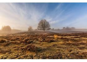 雾,自然,树,壁纸,(8)图片