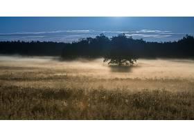 雾,自然,树,壁纸,(9)图片