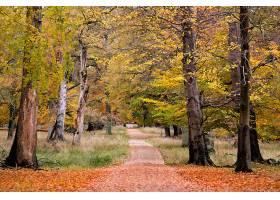 小路,自然,树,秋天,泥土,路,壁纸,图片