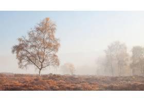 雾,自然,树,壁纸,图片