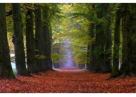 小路,自然,树,秋天,绿树成荫,壁纸,图片