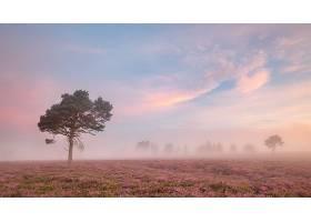 雾,自然,树,天空,粉红色,花,风景,壁纸,图片