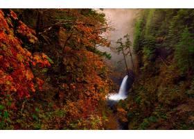 瀑布,瀑布,森林,秋天,叶子,树,壁纸,(4)图片