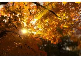 阳光,壁纸,(1)图片