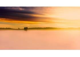 雾,自然,树,日出,冬天的,雪,壁纸,图片