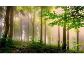 雾,自然,树,森林,壁纸,(2)图片