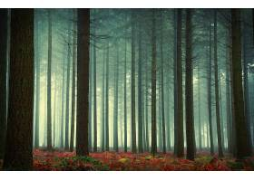 雾,自然,树,森林,壁纸,(4)图片