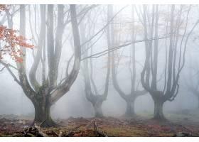 雾,自然,树,森林,壁纸,图片