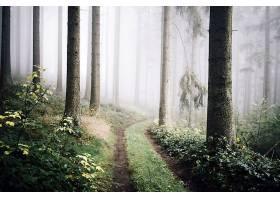 雾,自然,树,森林,泥土,路,壁纸,图片
