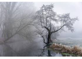 雾,自然,树,河,反射,壁纸,图片