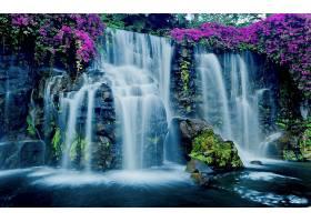 瀑布,瀑布,夏威夷,花,岩石,紫色,花,壁纸,图片