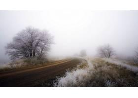 雾,自然,树,泥土,路,壁纸,(1)图片
