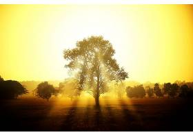 阳光,天空,日落,树,自然,风景,金色的,壁纸,图片