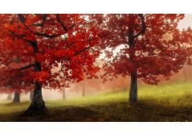 雾,自然,树,秋天,叶子,壁纸,图片