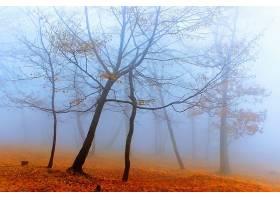 雾,自然,树,秋天,壁纸,图片