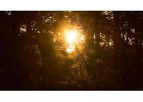 阳光,太阳,灯光,自然,树,日落,壁纸,图片