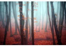 雾,自然,树,秋天,森林,壁纸,(1)图片